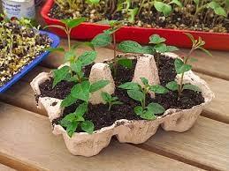 semis-pour-plante